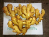 china fresh ginger with high quality