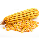 china yellow maize