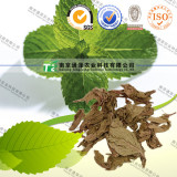 natural and factory price eu standard mint leaf